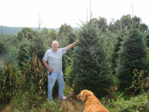 sturgills wholesale christmas tree farms are located in the heart of the blue ridge mountains in the northwest corner of north carolina - Christmas Tree Farms In North Carolina
