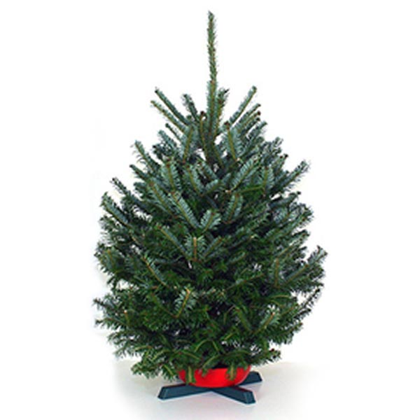 2 foot christmas trees - 2 Foot Christmas Tree
