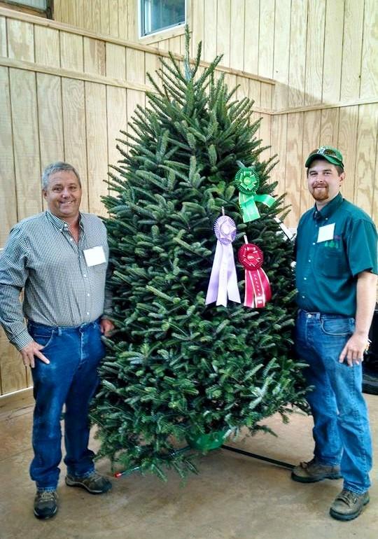 wholesale christmas tree farms - Wholesale Christmas Trees